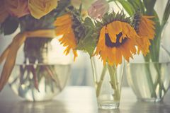 Different bouquets in vases Royalty Free Stock Photos