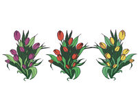 Different bouquettes of tulips Stock Photos