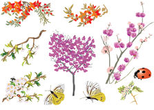 Different branches with flowers Stock Photos