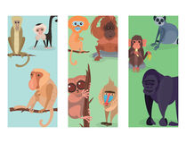 Different breads monkey print cards character animal wild zoo ape chimpanzee vector illustration.