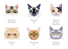 Cat breeds cartoon style  set. Isolated on white background. Different breed of cats: Persian cat, Japanese Bobtail Shorthair, Siamese, American Shorthair Stock Photography