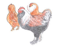 Different breed of rooster and hens royalty free illustration
