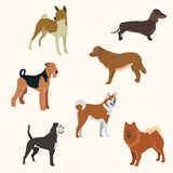Different breeds of dog. Flat style vector illustration