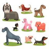 Different breeds of dog set, furry purebred human friends colorful  Illustrations Stock Images