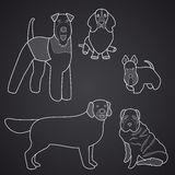 Different breeds of dogs in linear style. Part 1 Royalty Free Stock Photos