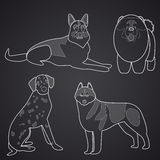 Different breeds of dogs in linear style. Part 2 Stock Photos