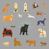 Different breeds of dogs. Set of different breeds of dogs. flat style Isolated vector illustration eps 10 Royalty Free Stock Photos