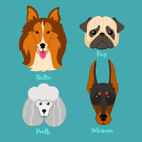Different breeds of dogs. Stock Photo