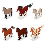 Different Breeds Horses Set with Pony, American Paintshorse and Tinker. Isometric flat 3d illustration Royalty Free Stock Photo