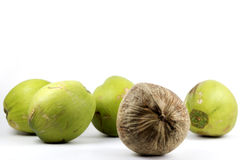 Different brown coconut in group of green Royalty Free Stock Photography