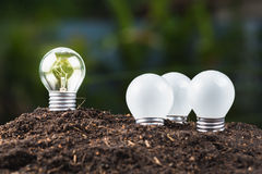 Different bulb Growing Stock Image