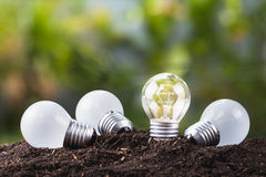 Different bulb Growing Stock Photo