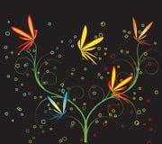 Different butterflies Stock Image