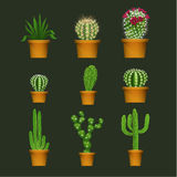 Different cactus types in flower pot realistic  vector icons set Royalty Free Stock Image