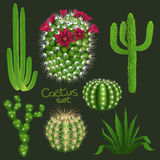Different cactus types realistic  vector icons set Royalty Free Stock Photos