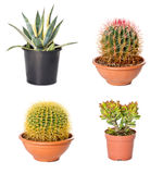 Different cactuses and agave in flowerpots Stock Images