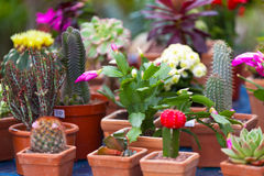 Different cactuses Stock Photos