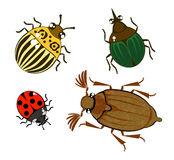 Different cartoon beetles Stock Images