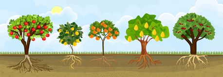 Different cartoon fruit trees with ripe fruits and green crown in garden. Plants showing root structure below ground level. Set of different cartoon fruit trees royalty free illustration