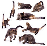 The different cat stock images