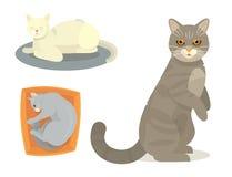 Different cat cute kitty pet cartoon cute animal cattish character set catlike illustration. Different cat cute kitty pet cartoon cute animal character set Stock Image