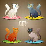 Different Cats Stock Images