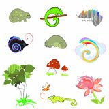 Different chameleons Royalty Free Stock Photo
