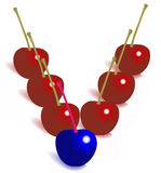 A different cherry- leader. A blue cherry among others Stock Photos