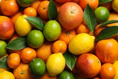 Different citrus fruits as background. Top view stock image