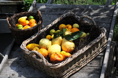 Different citrus fruits Royalty Free Stock Image