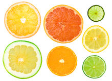 Different citrus slices Royalty Free Stock Photos