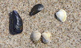 Different clam-shells Stock Image
