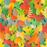 Different color autumn leaves pattern Stock Image