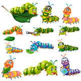 Different color caterpillar characters. Illustration Royalty Free Stock Images