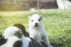 Dogs in green grass royalty free stock image