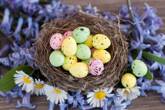 Different color Easter eggs Royalty Free Stock Photo