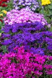 Different color flowers in the garden royalty free stock image