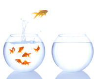 Different color goldfish jumping Stock Images
