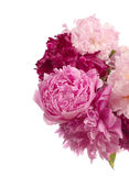 Different color peonies Stock Photos