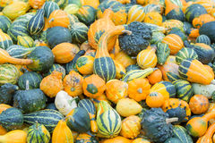 Different color pumpkins Stock Photos