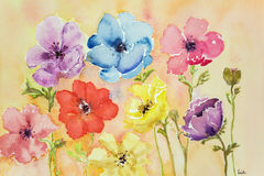 Different colored anemones. Stock Images