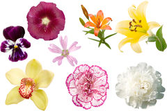 Different colored flowers Stock Photos