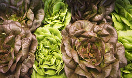 Different colored lettuces. In a produce market Stock Photo