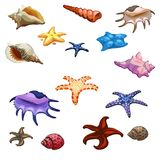Different colored mollusks, shells and starfish. Marine underwater inhabitants. Big vector set on white background Royalty Free Stock Images