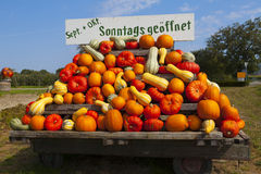 Different Colorful pumpkins on a tractor trailer Royalty Free Stock Images