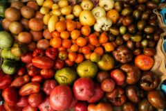 Different colorful tomatoes collected from a farmer`s market Stock Image