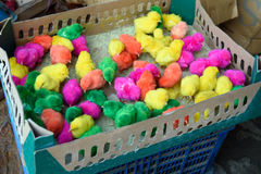 Different colors chicks, red, pink, green, yellow. Stock Photo