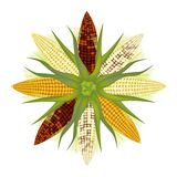 Different Colors of Corn Forming A Round Shape Stock Photo