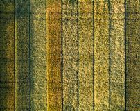 Different colors on an experimental culture of wheat Stock Images