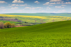 Different colors of  fields in countryside, spring  landscape Royalty Free Stock Image